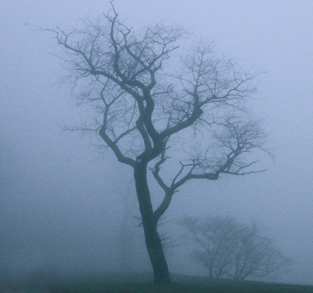 tree-in-fog